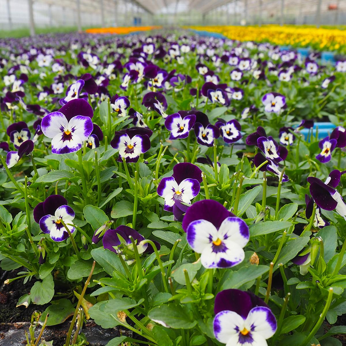 Guides And Features The Season S Best Edible Flowers