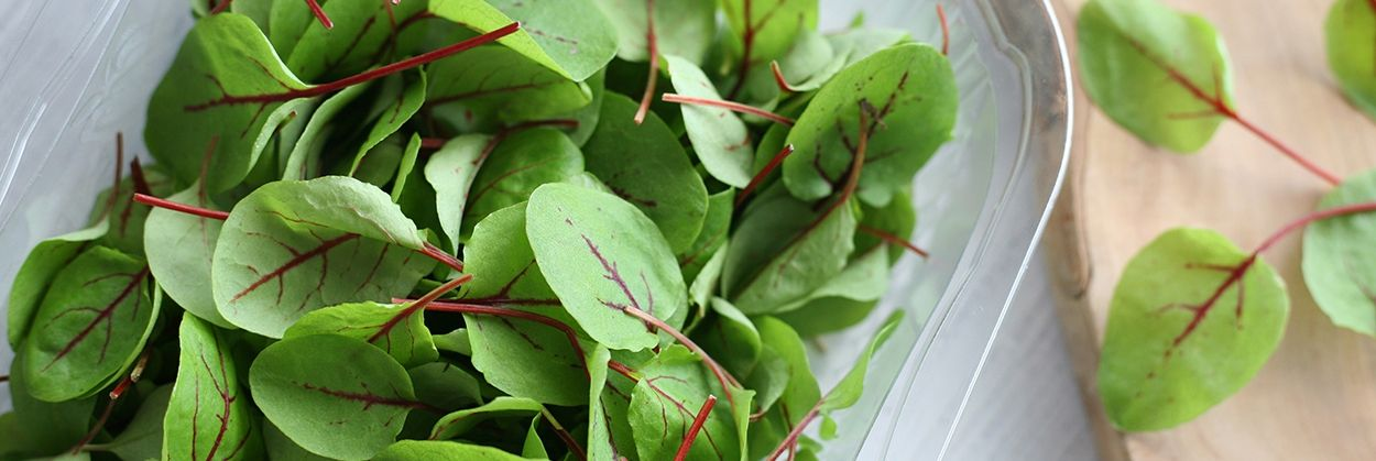 Micro Herbs & Microgreens UK: Chard, Sorrel & More | Fine Food